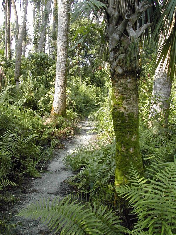 !ferns-&-sabal-palmetto-along-trail-on-9-3-2005---#2