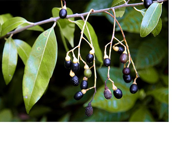 !!leaf-&-fruit-cup