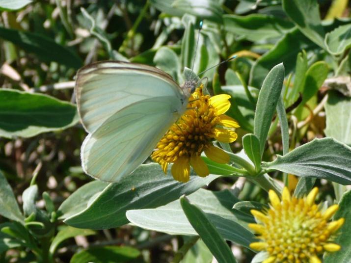 !s-white-bfly-by-nanacy-soucy