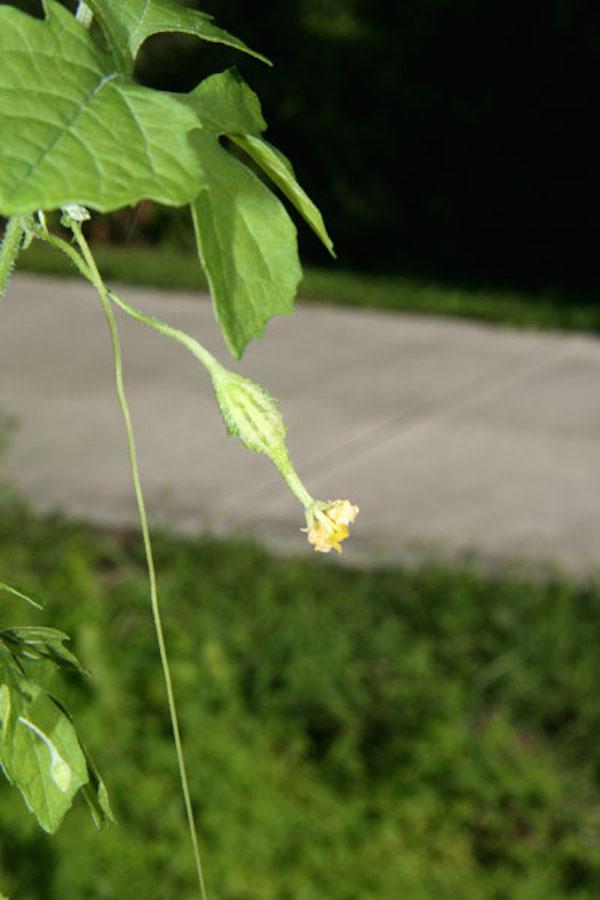 !for-web---momoridca-fruit-