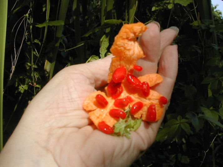 !Momordica charantia - fruits & arils copy