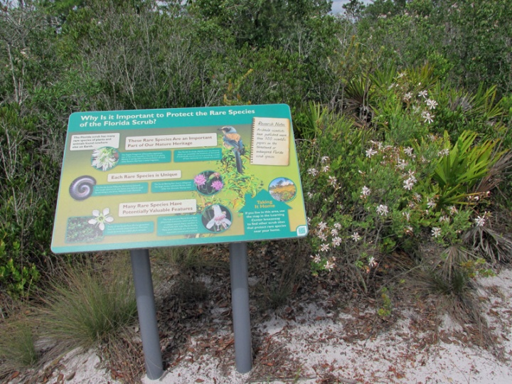 !bejaria-racemosa-w-interpretive-sign-@-abrs