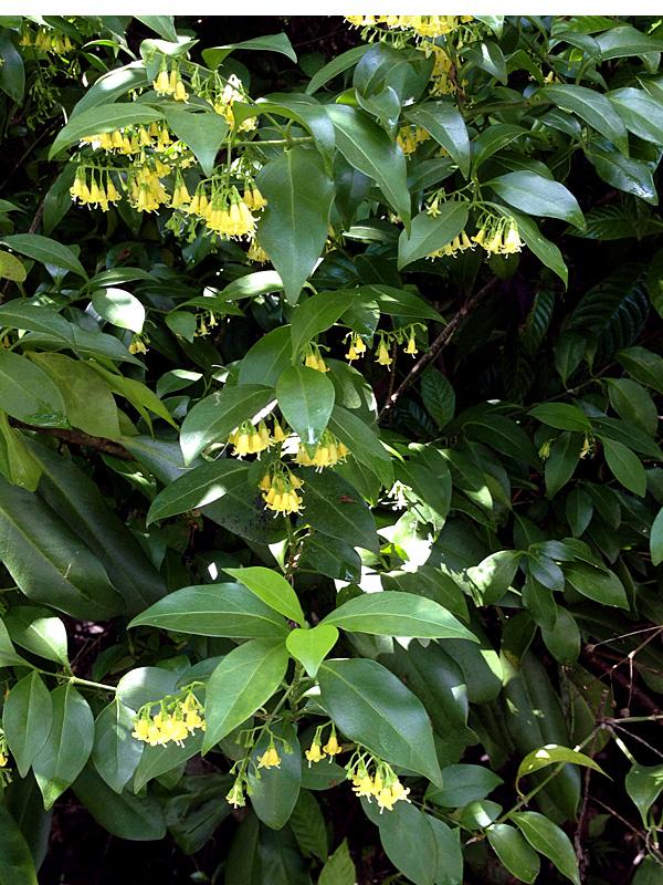 !chioccoa-alba-flowers