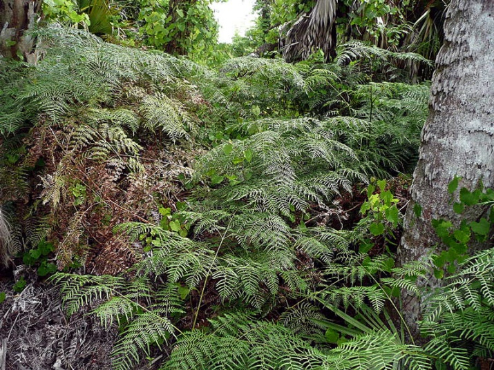 !Fern-Forrest-at-ORCA(1)---nancy-soucy