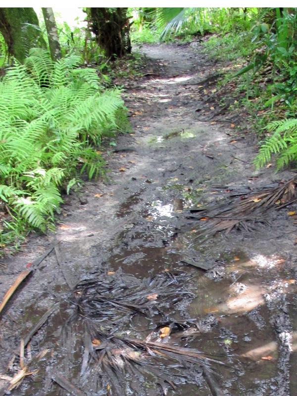 !soggy-trail