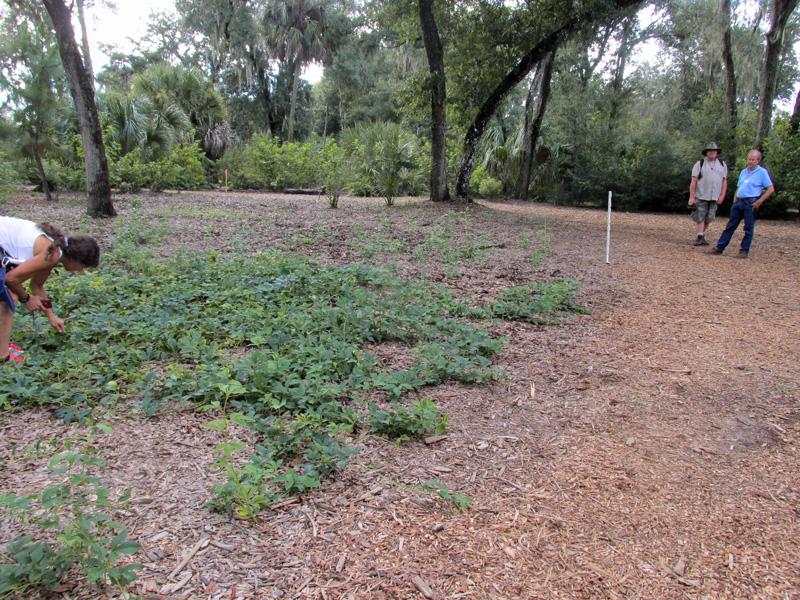 !passiflora-incarnata-bob-2-&-judy