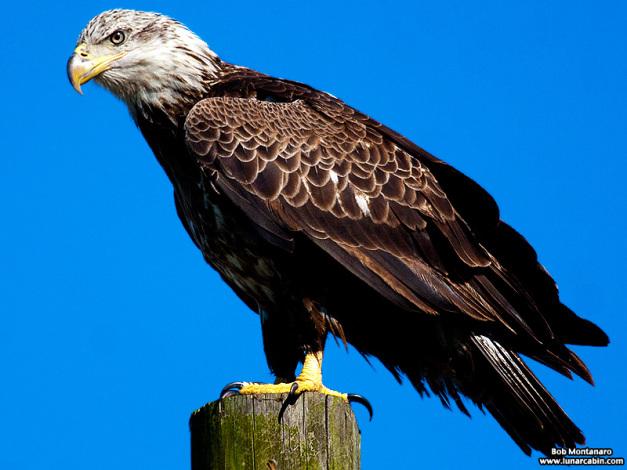 eagle_150107_1