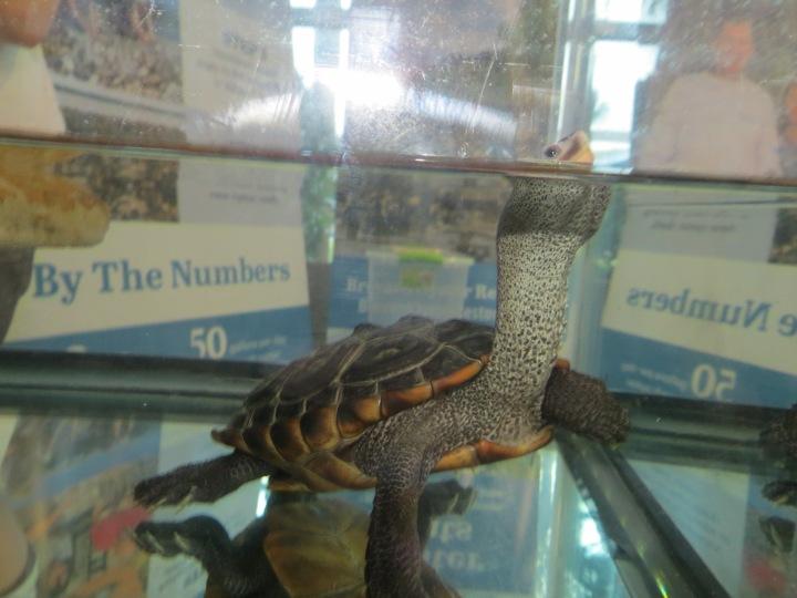 !!david1 at brevard zoo