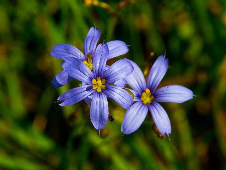 wildflower_workshop_031415_19