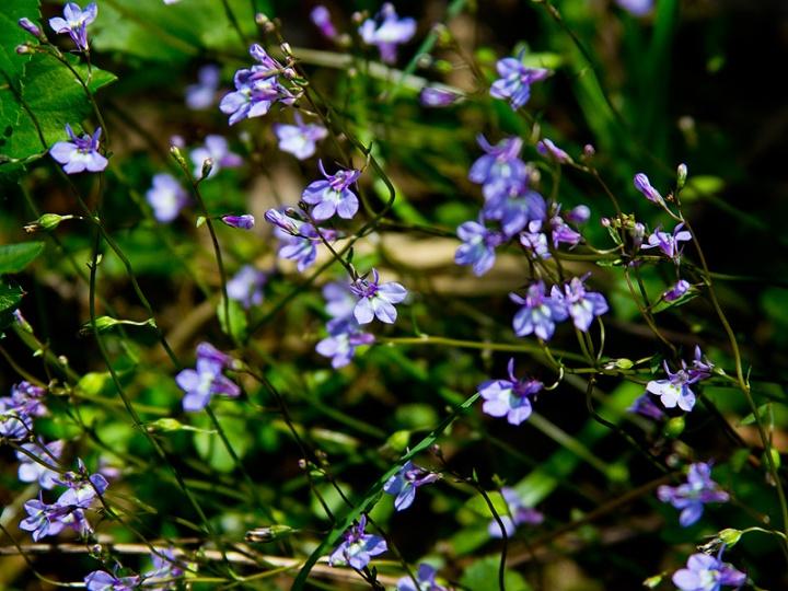 wildflower_workshop_031415_8