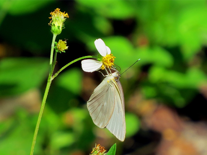 !!!!southern-white-female-on-bidens