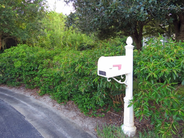 !!!!citharexlum-hedge-&-mailbox