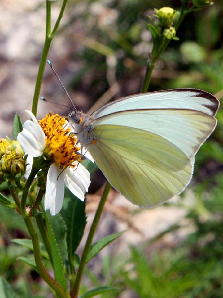 !!!!southern-white-on-bidens-vertcal