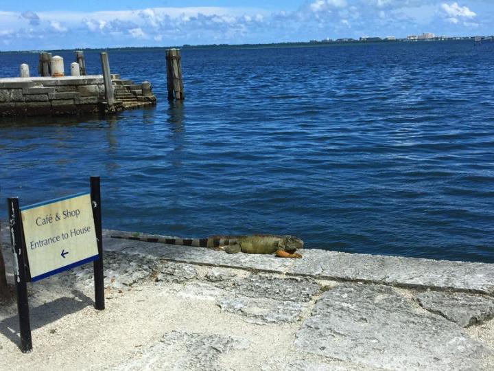 !!!!iguana-at-vizcaya2