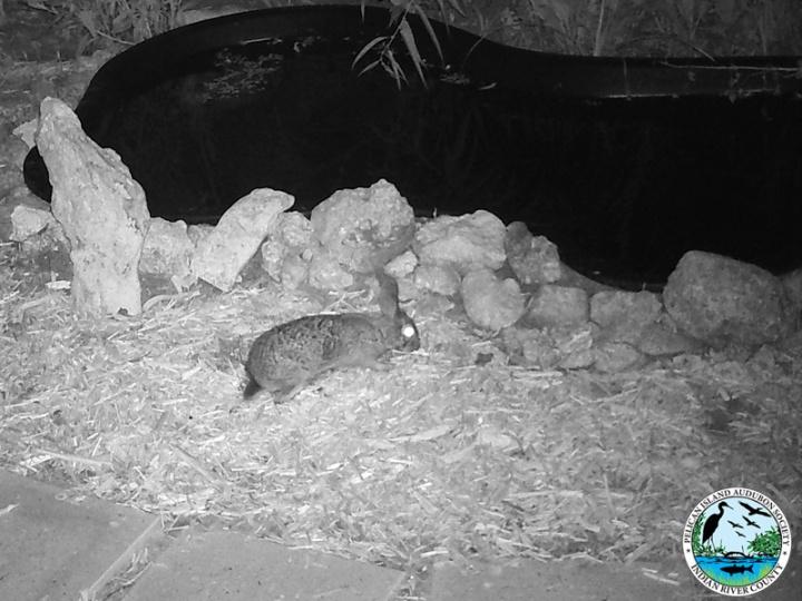 rabbit_032917_3