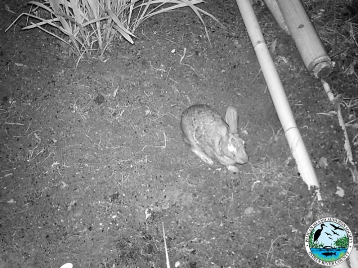 rabbit_032917_5