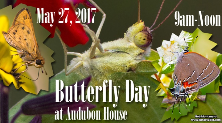 butterfly_day_052717